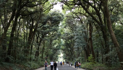 Meiji Shrine Tokyo Japan (002)